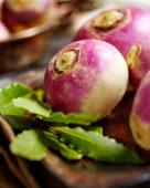 Brassica rapa var. rapa, turnip