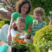 Family planting tagetes