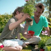 Father and son planting cosmea