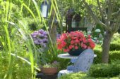 Summer Garden, Hydrangea macrophylla, Impatiens red