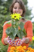 Woman holding pot with sunflower