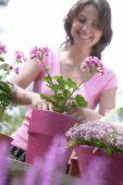 Woman planting pelargonium