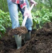 Shoveling organic soil