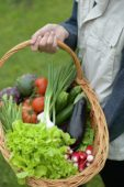 Holding basket with vegetable harvest