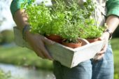 Woman carrying tray of herbs