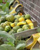 Pumpkin assortment