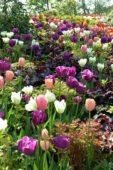 Spring border purple