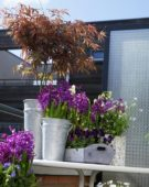 Balcony with spring flowers on pots