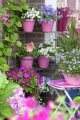 Porch with annuals on pots