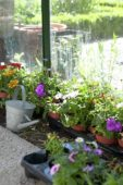 Greenhouse bench with annual flowers
