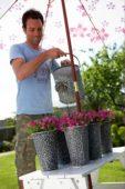 Man watering phlox