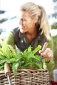 Woman planting ferns in basket