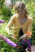 Woman cutting Montbretia flower