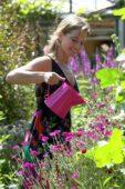 Woman watering flowers in summer garden