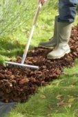 Gardener levelling tree bark on garden path