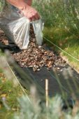 Placing shells for garden path