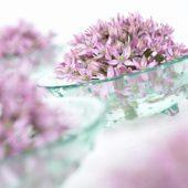 Allium nigrum Rosa