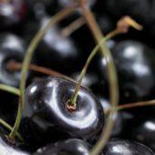 Prunus avium Kordia