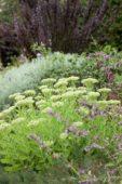 Vaste planten border