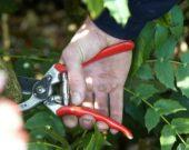 Man pruning tree