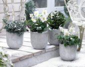 Vaste planten op patio
