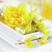 Narcissus Dick Wilden on plate
