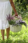 Woman holding basket with plants