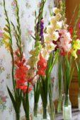 Gladiolus arrangement