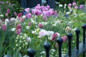 Spring border mixed