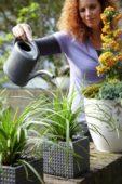 Vrouw geeft Carex op pot water