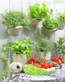 Groenten en kruiden
