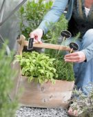 Herbs in container