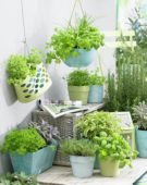 Herbs on patio