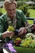 Vrouw plant succulenten