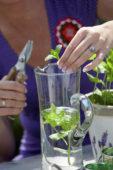 Vrouw tuiniert met kruiden