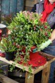 Planten van winter container