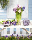 Hyacinths in vase