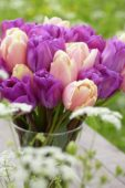 Tulipa Magic Lavender, Mango Charm