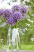 Allium Purple Caila