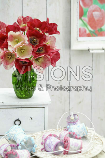 Tulipa Hemisphere