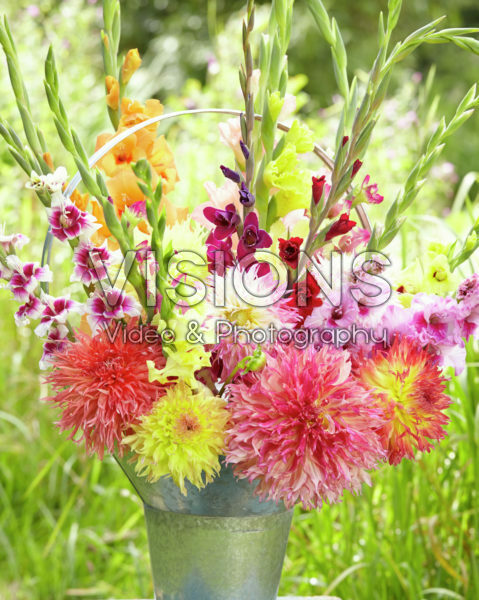 Dahlia and gladiolus mix