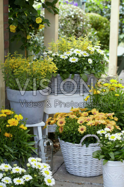 Annuals and perennials on pot