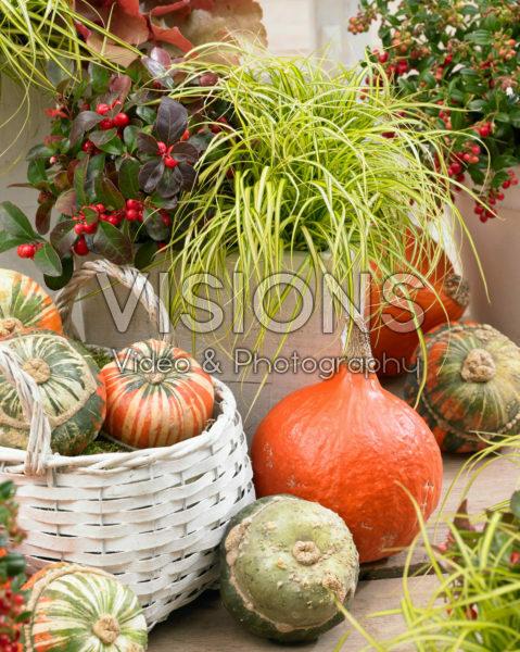 Carex EverColor® Eversheen