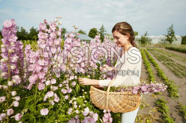 Lady picking Delphinium flowers