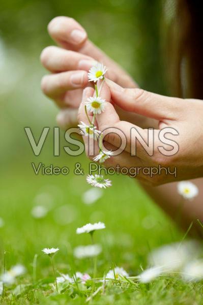 Chain of daisies