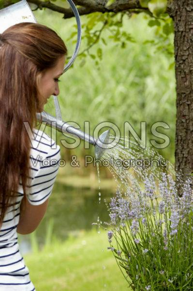 Watering lavender
