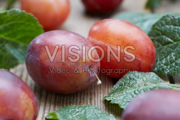 Prunus domestica Valor
