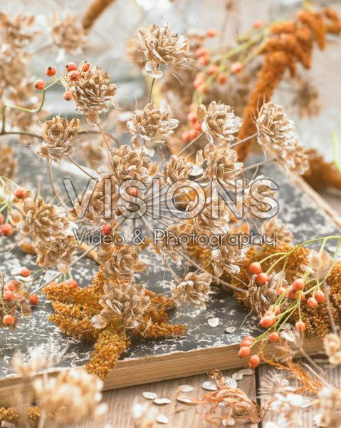 Anthriscus sylvestris seeds