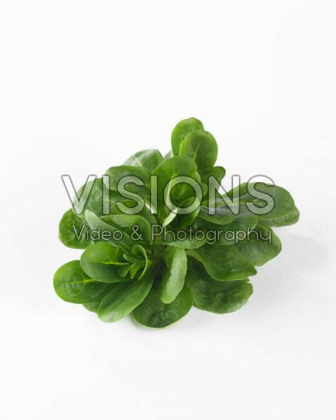 Valerianella locusta Verte a Coeur Plein 3