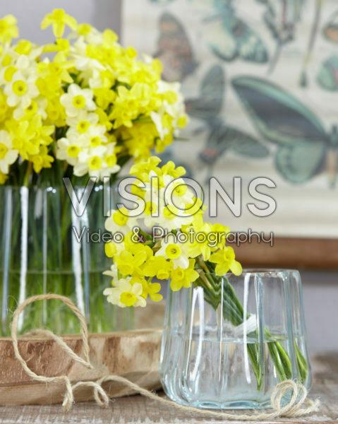 Narcissus Minnow, Sabrosa